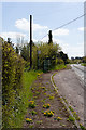 SU4226 : Dandelions and Bus Stop at Standon by Peter Facey