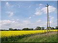 TF9435 : Electricity pole in oilseed rape crop field by Evelyn Simak