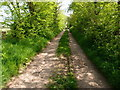 TL0893 : Elm lined track by Michael Trolove