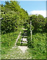 TL1230 : Steps on the Chiltern Way by Humphrey Bolton