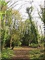 ST5377 : Severn Way, Penpole Wood by Derek Harper