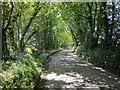 SX3070 : Lane at Redwood by Derek Harper