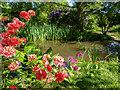 TQ2997 : Japanese Garden, Trent Park, Cockfosters, Hertfordshire by Christine Matthews