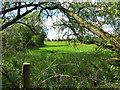 SU9271 : Field Behind The Pub by Des Blenkinsopp
