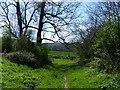 SU8415 : Path on Stapleash Down by Chris Gunns