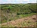 SX3467 : Lynher valley by Derek Harper