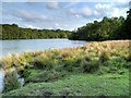 SJ7579 : The Southern End of Tatton Mere by David Dixon