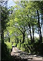 SX3271 : Lane to Trewoodloe by Derek Harper