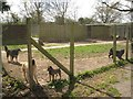 SP0563 : Barking dogs in an enclosure at The Kennels, between Astwood Bank and Studley by Robin Stott