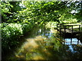 TL5150 : Green pool of the River Granta at Babraham by Bikeboy