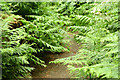 J4078 : Ferns and path, Glenlyon, Holywood (June 2014) by Albert Bridge