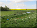 TL4076 : Counterwash and Sutton Fen by Hugh Venables