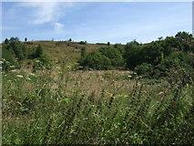 SJ9344 : Hulme Quarry National Nature Reserve by JThomas