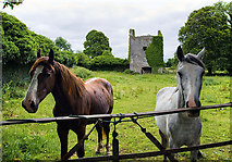 M7645 : Castles of Connacht: Castle Ffrench ,Galway (3) by Mike Searle