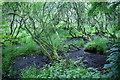 SW6526 : Boggy land in the Loe Valley by Bill Boaden