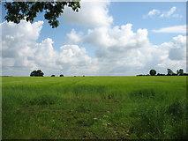 N4218 : Farmland east of Killeigh by David Purchase