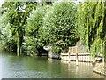SU9975 : River Thames New Cut, Ham Island by David Dixon