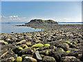 NG5251 : Holm Island : Week 29 winner