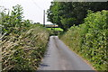 SS7020 : North Devon : Country Lane by Lewis Clarke