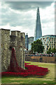 TQ3380 : Tower poppies : Week 31