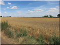 TL2867 : Wheat field by Mere Way by Hugh Venables