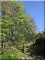 SX3170 : Track near Scrawsdon by Derek Harper