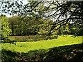 SX3170 : Meadow by the Lynher by Derek Harper