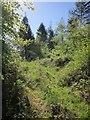 SX3169 : Track, Bicton Wood by Derek Harper