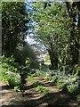 SX3169 : Track, Bicton Manor by Derek Harper