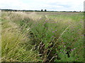 TL1280 : Dike full of wild flowers on Winwick Hill by Richard Humphrey