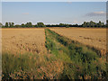 TL3872 : Fields off Long Holme Drove by Hugh Venables