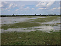 TL3767 : Wet field by Ramper Road by Hugh Venables