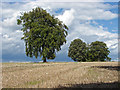 TQ0550 : Trees, Clandon Downs by Alan Hunt