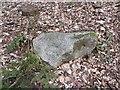 SO7489 : Granite erratic, Dudmaston by Richard Webb