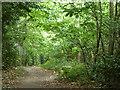 TQ3865 : Path, Spring Park woodland by Robin Webster