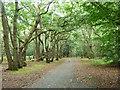 SU9585 : McAuliffe Drive, Burnham Beeches by Robin Webster