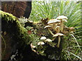NR7991 : Fungi and lichens on a stump : Week 36