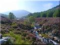 NR9746 : North Glen Sannox : Week 36