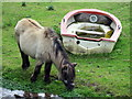 SJ5765 : Shetland Pony and Boat by Jeff Buck