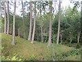 NH8404 : Woodland, Invereshie by Richard Webb