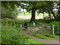 TG1629 : Dog walkers in The Great Wood, Blickling Park by Richard Humphrey