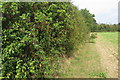 TL0954 : Fruity hedge by Renhold Road by Philip Jeffrey