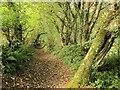 SX8980 : Bridleway near Waddon : Week 39