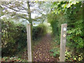 SK3499 : Footpath off Black Lane towards Bull Wood by Ian S