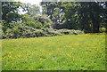 TQ5939 : Meadow, Dunorlan Park by N Chadwick