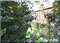 TQ3092 : Pymmes Brook by Green Lanes, Palmers Green by David Howard