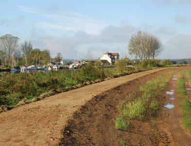TG3504 : Flood bank, River Yare at Buckenham Marshes by Jeremy Halls