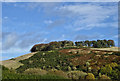 NO2615 : Woodmill Hill : Week 42