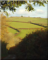 SX7951 : Lane by Higher Wood Farm by Robin Stott