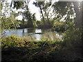 SP9750 : Pond by Mount Pleasant Farm by Philip Jeffrey
